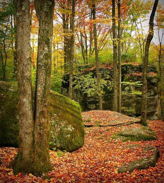 Autumn on the rocks, via Flickr.