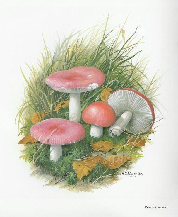 Вышивка крестом грибы фото