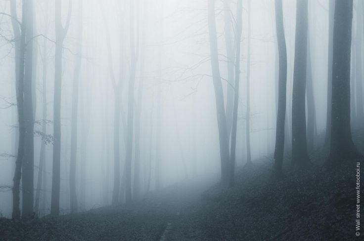 Фотообои Туманный лес 473