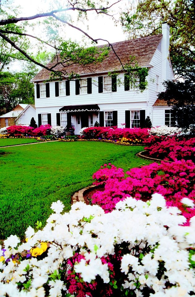 This is so beautiful! Everyone needs to come see the Azalea Trail in Tyler, Texas in March and April.