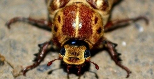 Commercial Pest Control in Gloucestershire #Pest #Control #at...