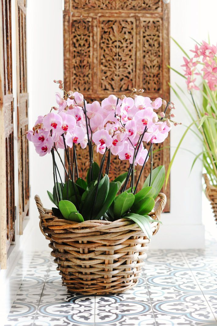How to Keep an Orchid Alive via @domainehome