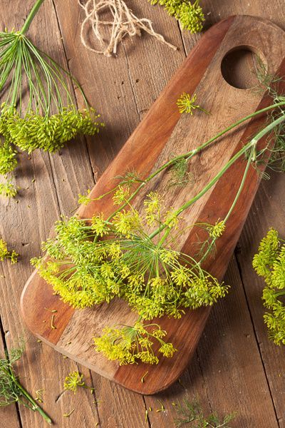 Raw Organic Pickling Dill by Brent Hofacker on 500px