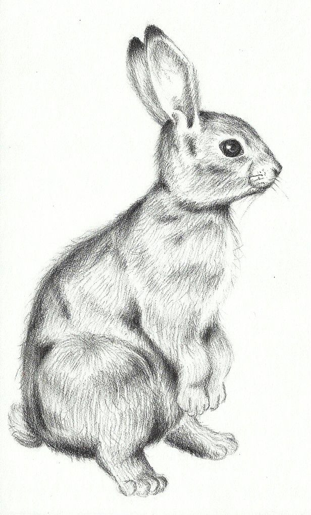 Bunny Pillows | Go Back U0026gt; Gallery For U0026gt; Standing Rabbit Sketch | Easter | Pinterest | Drawing ...