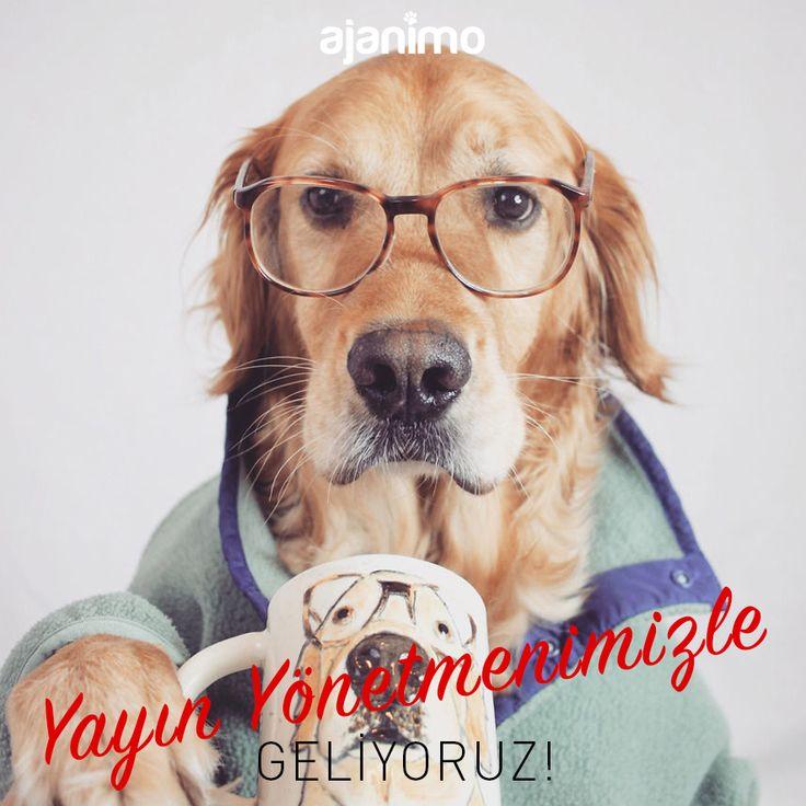 Bir Köpeğin Yayın Yönetmenliğinde Hayvan Gibi Haber Sitesi I Bigumigu