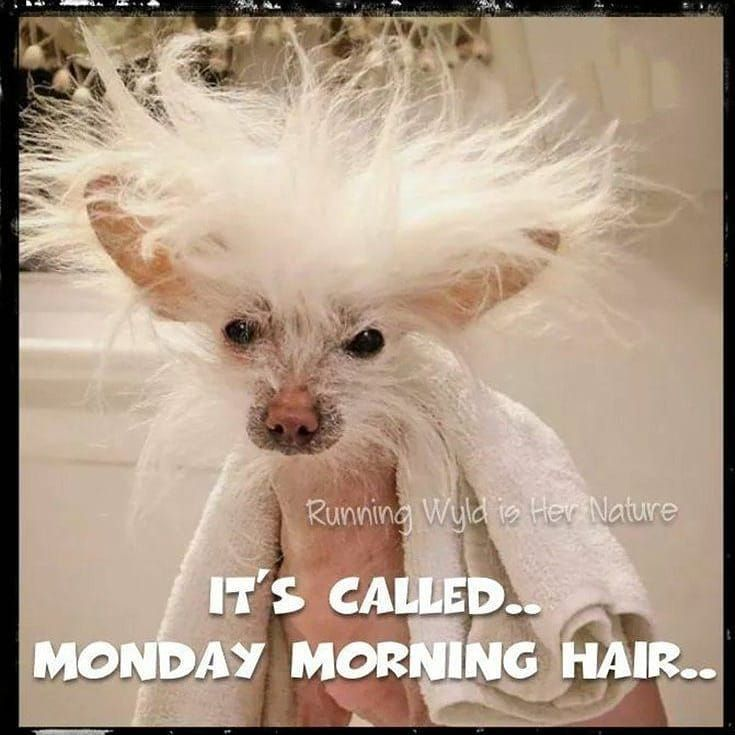 Monday Morning Hair Morning Quotes Funny Funny Good Morning Quotes Morning Memes