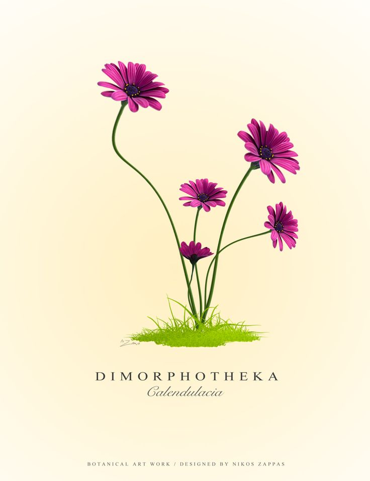 Botanic Art Work by Nikos Zappas ®
