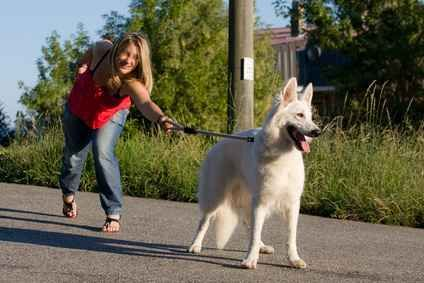 Come fare ad educare il cane a camminare correttamente al guinzaglio Nell'articolo vedremo quali regole e comportamenti seguire per educare il nostro cane a camminare correttamente al fianco senza tirare o strattonare. Faremo uso poi del rinforzo positivo, secondo la #cane #addestramento