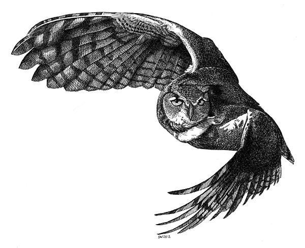 Owl Drawings | Flying Owl Drawing by Scott Woyak - Flying Owl Fine Art Prints and ...