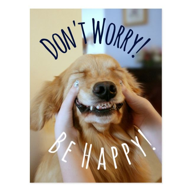 Smiling Golden Retriever Dog Don T Worry Be Happy Postcard