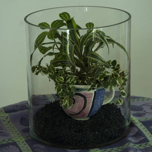 104 Best Images About Terraria On Pinterest: 14 Best Images About Terrariums On Pinterest