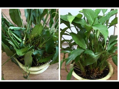 Картинки по запросу Как оживить даже самое хилое комнатное растение