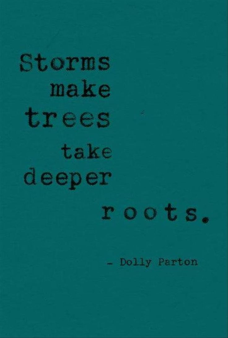 Storms make trees take deeper roots~
