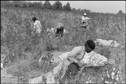 South Carolina. Cotton plantation.