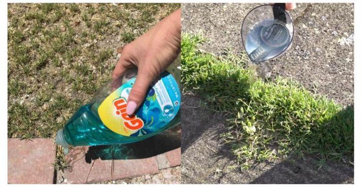 Ein Gärtner zeigt einen einfachen Trick, mit dem sich Unkraut schnell, günstig und effektiv entfernen lässt!