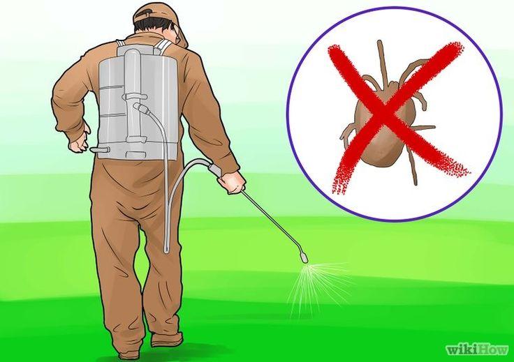 Get Rid of Chiggers Step 14.jpg