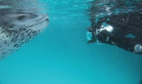 Facing Fear: National Geographic Photographer Teaches us How in Scary Encounter with Leopard Seal (Video) - EcoSalon | Conscious Culture and...