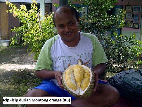 Ready Bibit Durian Unggul Hasil Produksi bibit sendiri di Sumberan, Salaman, Bpk Faisal 082.137.433.114