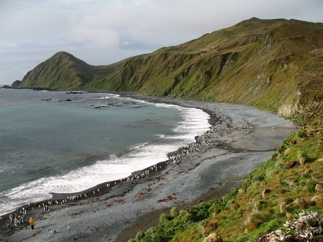 Macquarie Island (Photo taken by M. Murphy) #travel, #Tasmania, #Australia