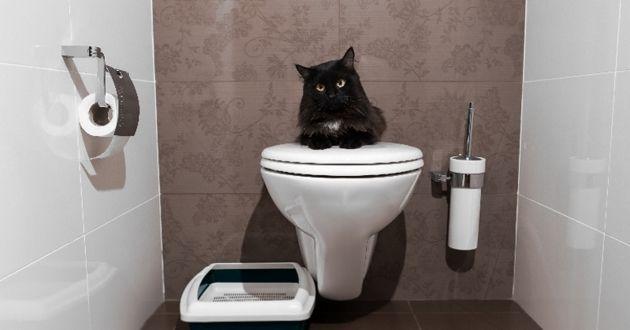Votre chat n'urine pas au bon endroit ? Une comportementaliste vous répond