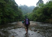 Expedition Jungle | Tailor made expeditions in the rain forests of North Sumatra, Indonesia.
