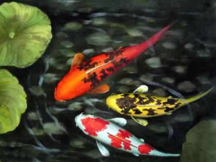 1000 images about pisces fish on pinterest for Koi fish pisces