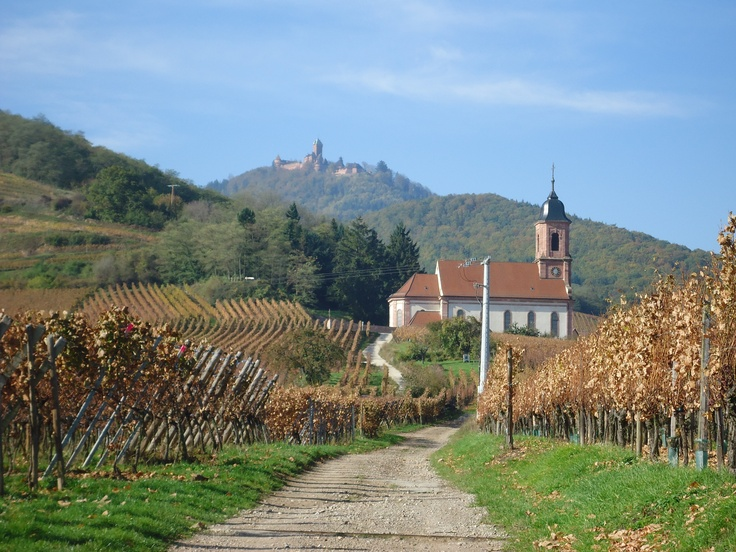 Viewing le chateau Haut Koenigbourg from a vineyard...