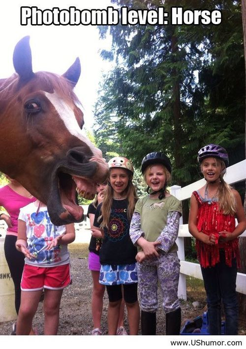 Horse photobomb picture US Humor - Funny pictures, Quotes, Pics, Photos, Images