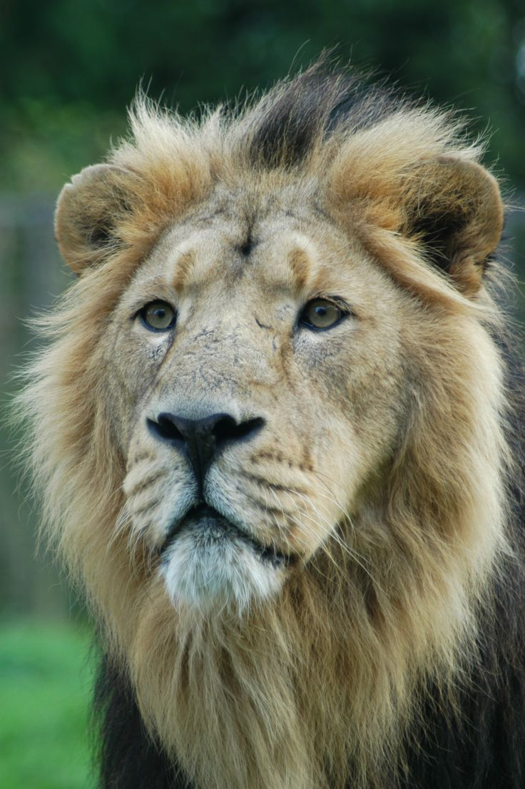 The only wild Asiatic lions along with various other
