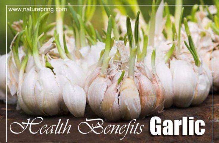 garlic cover photo copy