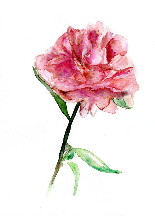 getekende bloem (gedetaileerd)