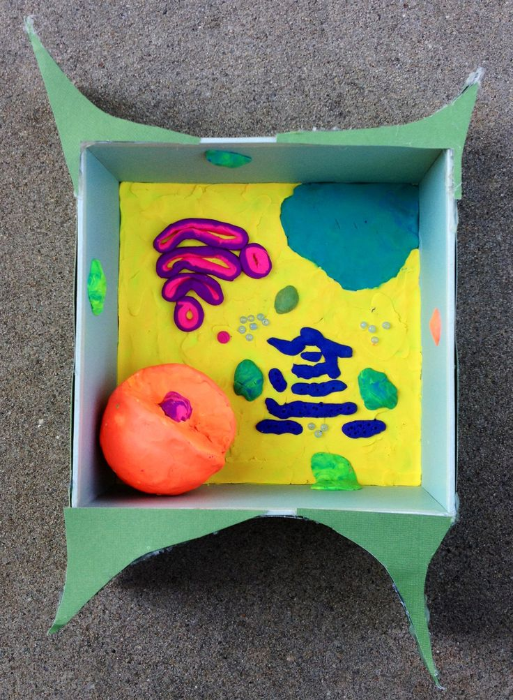 Kaitlyn's plant cell model.