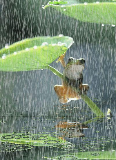 Дождь картинки прикольные гифки