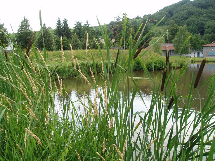 38 Glorious Japanese Garden Ideas: Pond With Reeds, Klingenmünster