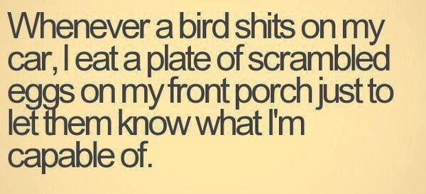 That'll teach them!: Like A Boss, Laughing, Food Chains, Scrambled Eggs, Giggl, Funny Quotes, Funny Stuff, Birds, Front Porches