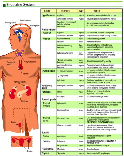 Hormone chart - great visual aid when talking about Energy Medicine and hormones