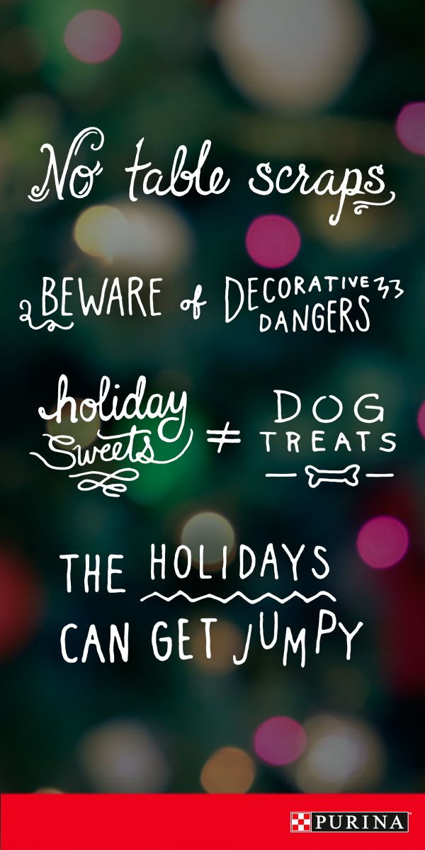 Make this holiday season a safe one with these holiday safety tips for you and your dog at Purina.com.