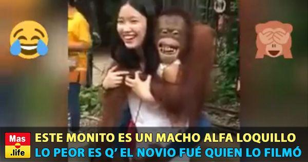 Levanta el animo con este clip, ¡a que es mono el monito!  Este monito es un macho alfa loquillo... Lo peor es q' el novi...Este monito es un macho alfa loquillo. Lo peor es q' el