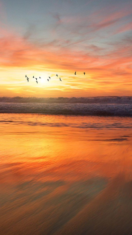 SUNSET SEA NATURE ORANGE SUMMER SKY BIRD WALLPAPER HD IPHONE SUNSET SEA NATURE ORANGE SUMMER SKY BIRD WALLPAPER HD IPHONE