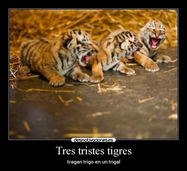 tres tigres tiernos
