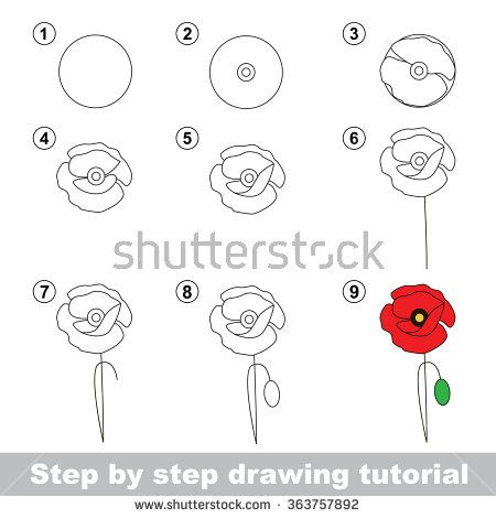 Best 25 poppy drawing ideas on pinterest poppies for Poppy drawing step by step