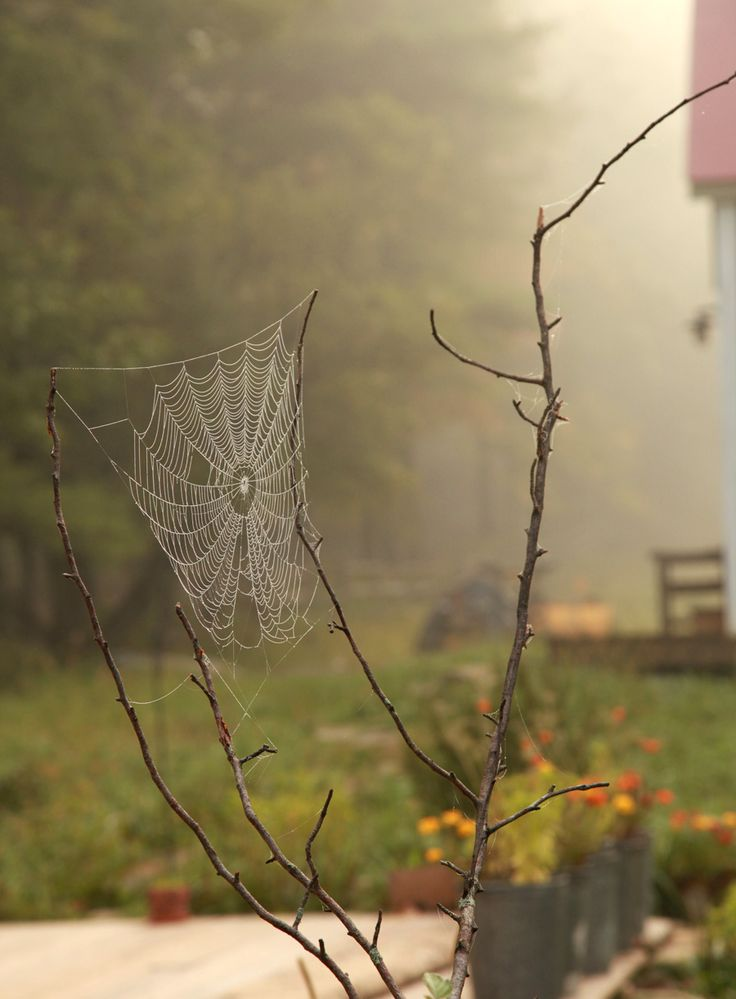 Spiderweb Spiders Web, Beautiful Spiders, Cobweb, Spider Webs, Amazing Spiders, Architecture Beautiful, Charlotte'S Web, Spiderweb Photos, Beautiful Web