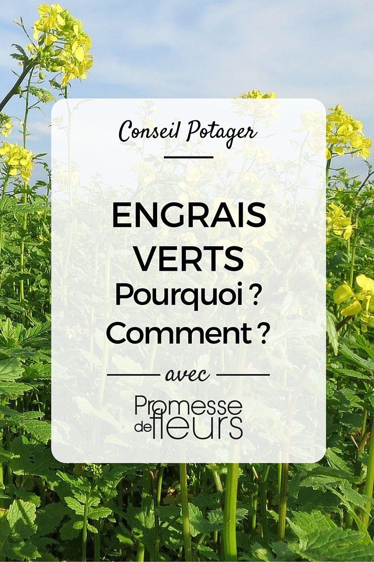 Potager - fiche conseil Engrais verts - L'utilisation des engrais verts fait partie des bonnes pratiques au potager, notamment lorsque celui-ci est conduit de façon biologique. Pourquoi ? Comment les utiliser ?