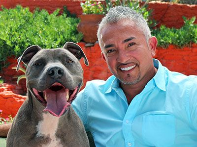 by Cesar Millan Go beyond the stereotype and you'll discover a smart, calm, and loving companion, just as I did 20 years ago A dog is a dog. It seems a pretty obvious statement, doesn't