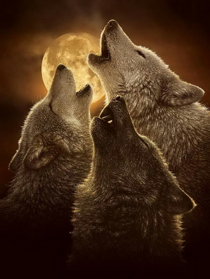 Wolves something about the full moon and the howling. Great pic.