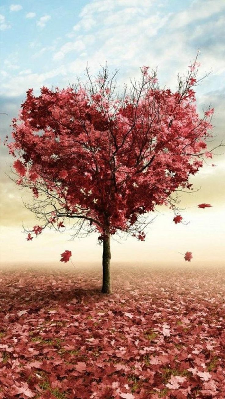 Nature Red Love Fall Tree iPhone 6 wallpaper
