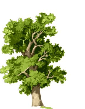 Oak Tree Clip Art | Free Tree Clipart