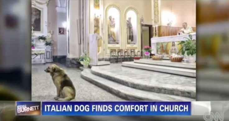 Un chien se pr�sente aux fun�railles de sa ma�tresse