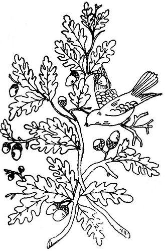 1886 Ingalls Oak Branch w Bird | Flickr - Photo Sharing!