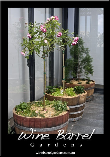 M s de 25 ideas incre bles sobre macetas de barril de vino for Jardin winery